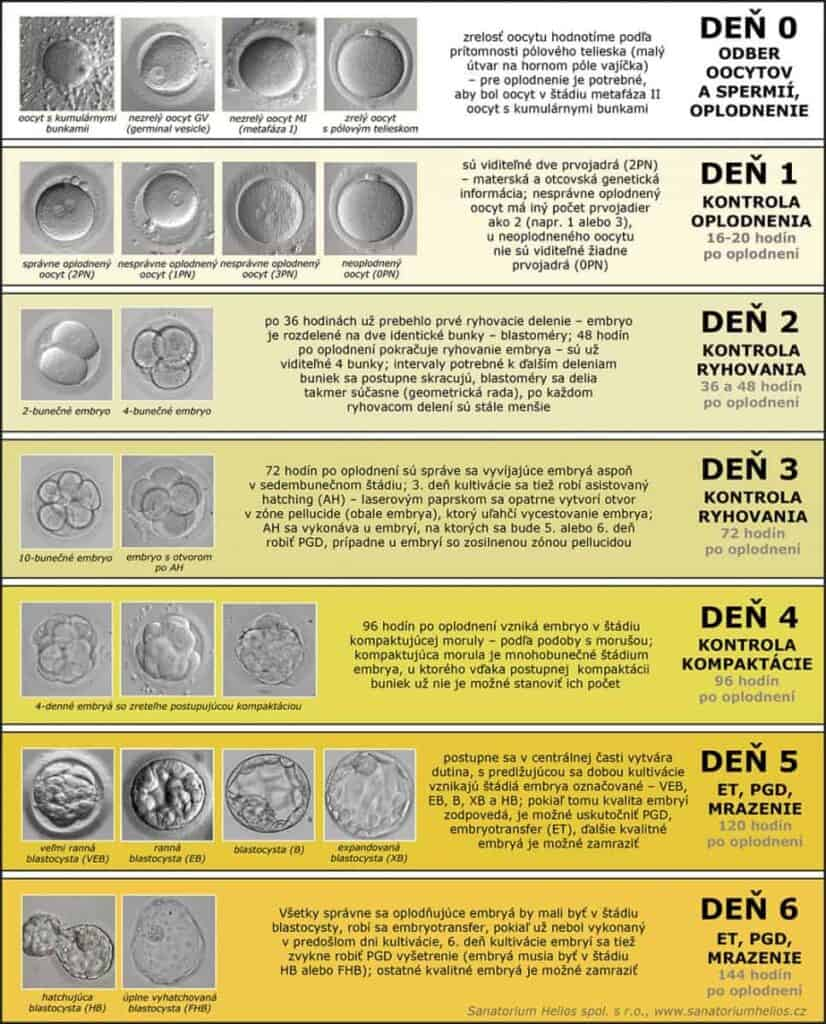 Kultivacia embryí